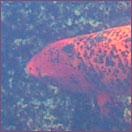 [fishhead]