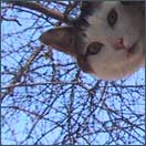 [kittie in a tree and I want to touch it]