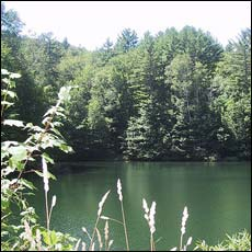 pond at the point where the trails diverge