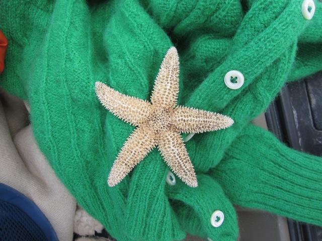 starfishsweater