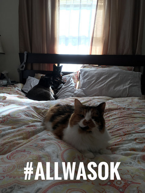 three cats on a colorful bed with the #allwasok hashtag on it.